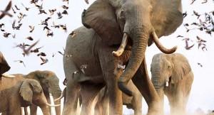 sl_elephants