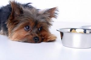 Правильный корм для собак